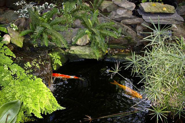 Pondkeeping advice for Garden pond advice