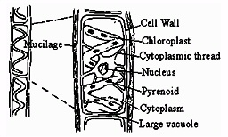 The cellular structure of a cell